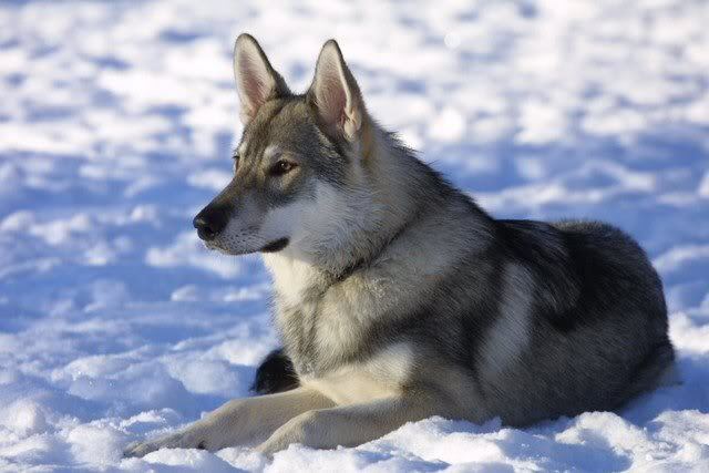 фото волчья жизнь