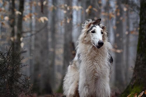 Фильм Собачья жизнь качество hd 1080p