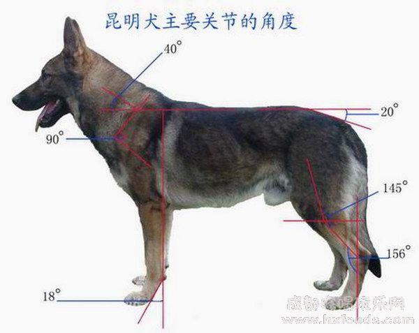 На страницу собаки похожие на волков
