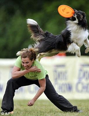Догфризби, Skyhoundz, летающие тарелки
