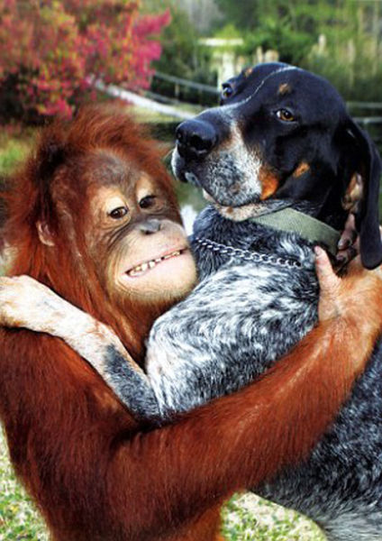 Собака и обезьяна, орангутанг