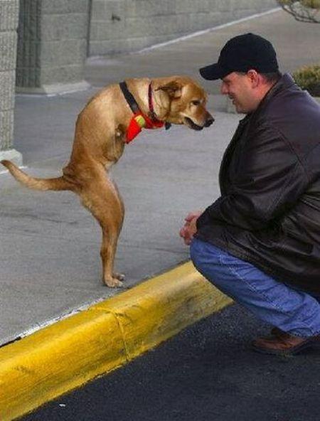 жизнь собаки Вера