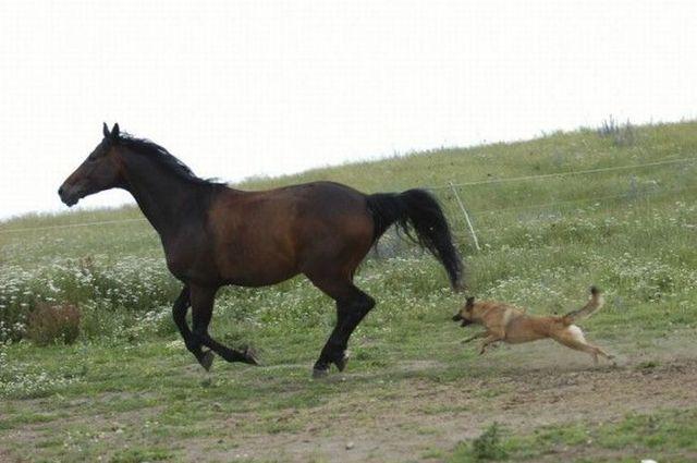 Бешеная лошадь
