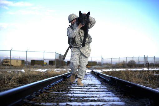 Собаки в армии США