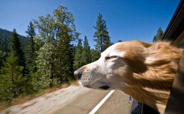 Собаки в окне машины
