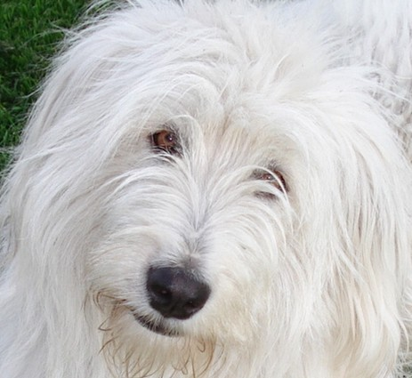 На страницу собаки россии
